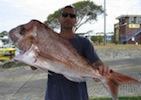 Moreton Island Fishing Charters Beautiful Big Snapper